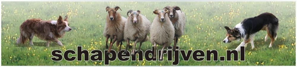 schapendrijven.nl